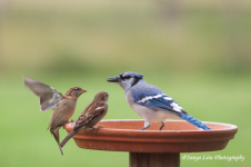birds1sonyaliraphotography