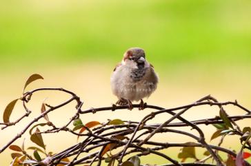 sonyaliraphotographybabybird