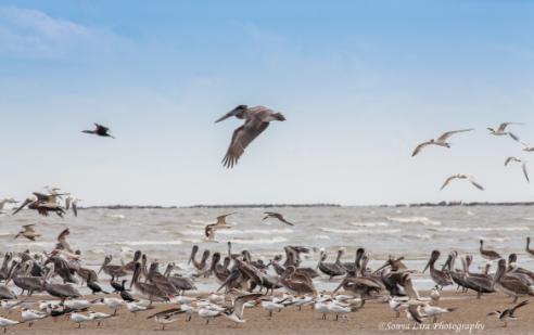 sonyaliraphotographybeachbirds1