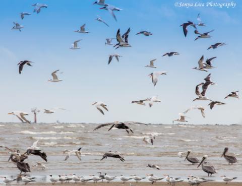 sonyaliraphotographybeachbirds2