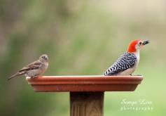 sonyaliraphotographywoodpecker1