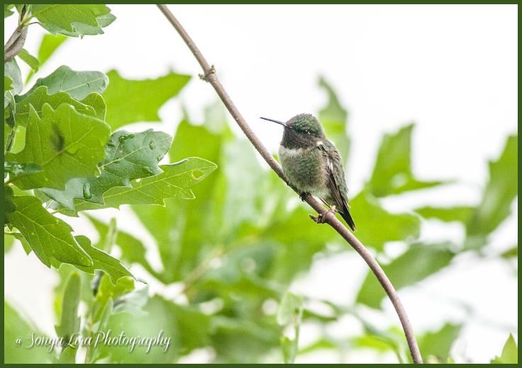 SonyaLiraPhotographyTinybirds