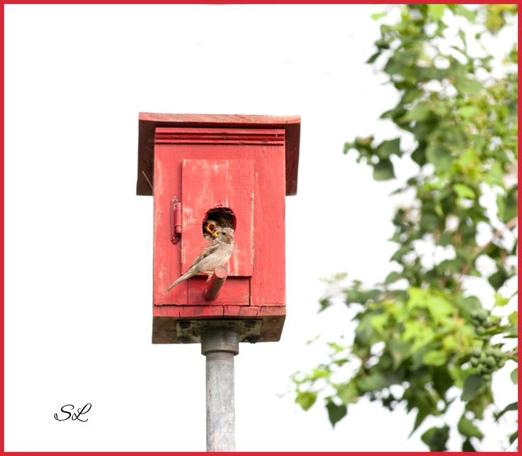Babybirds2