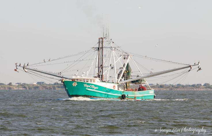 Shrimpboat2