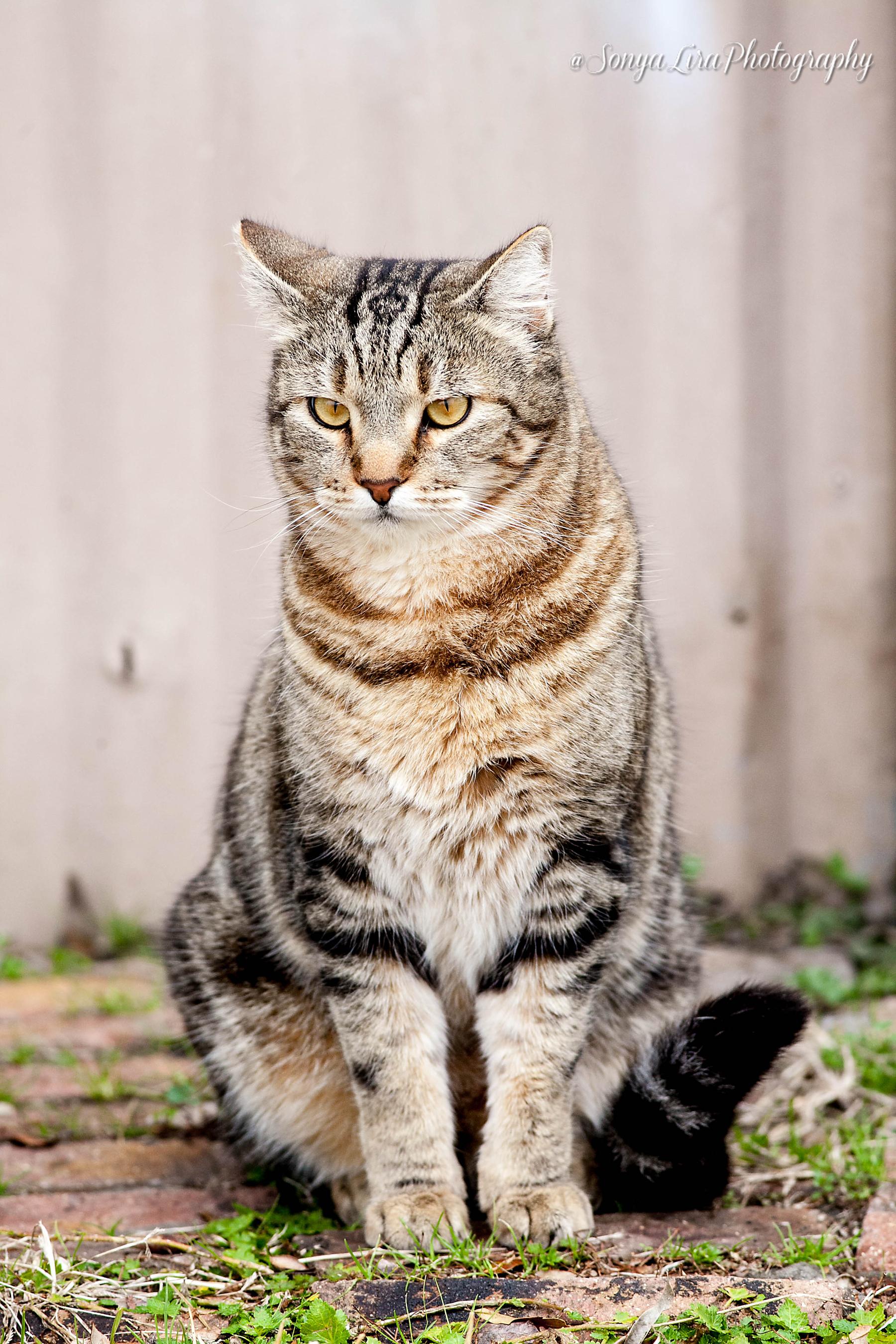 Stripeycat1