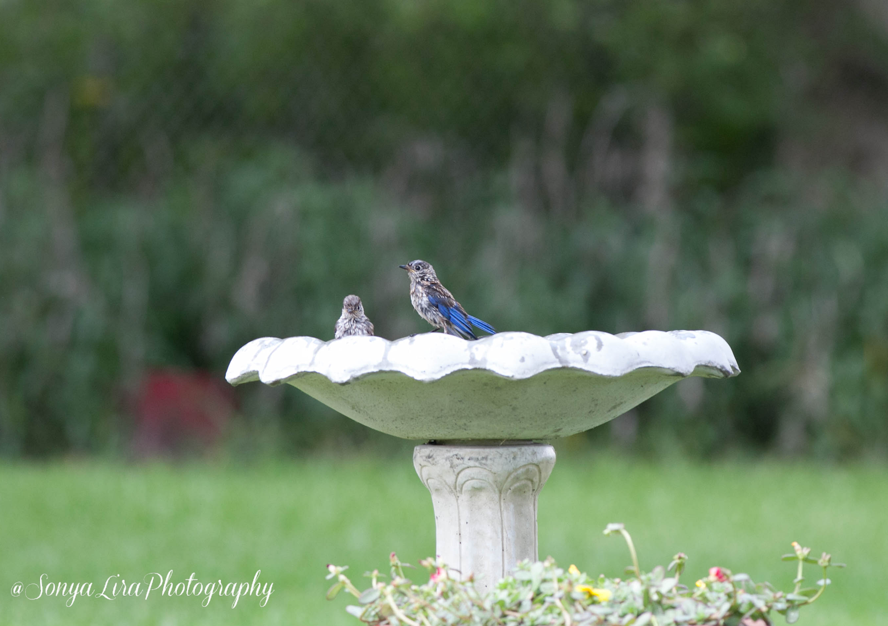 Bluebirdfriends2