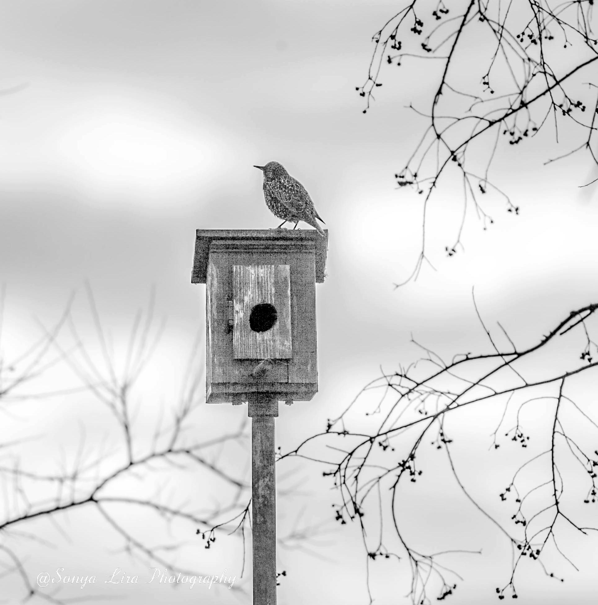 birdandhouse