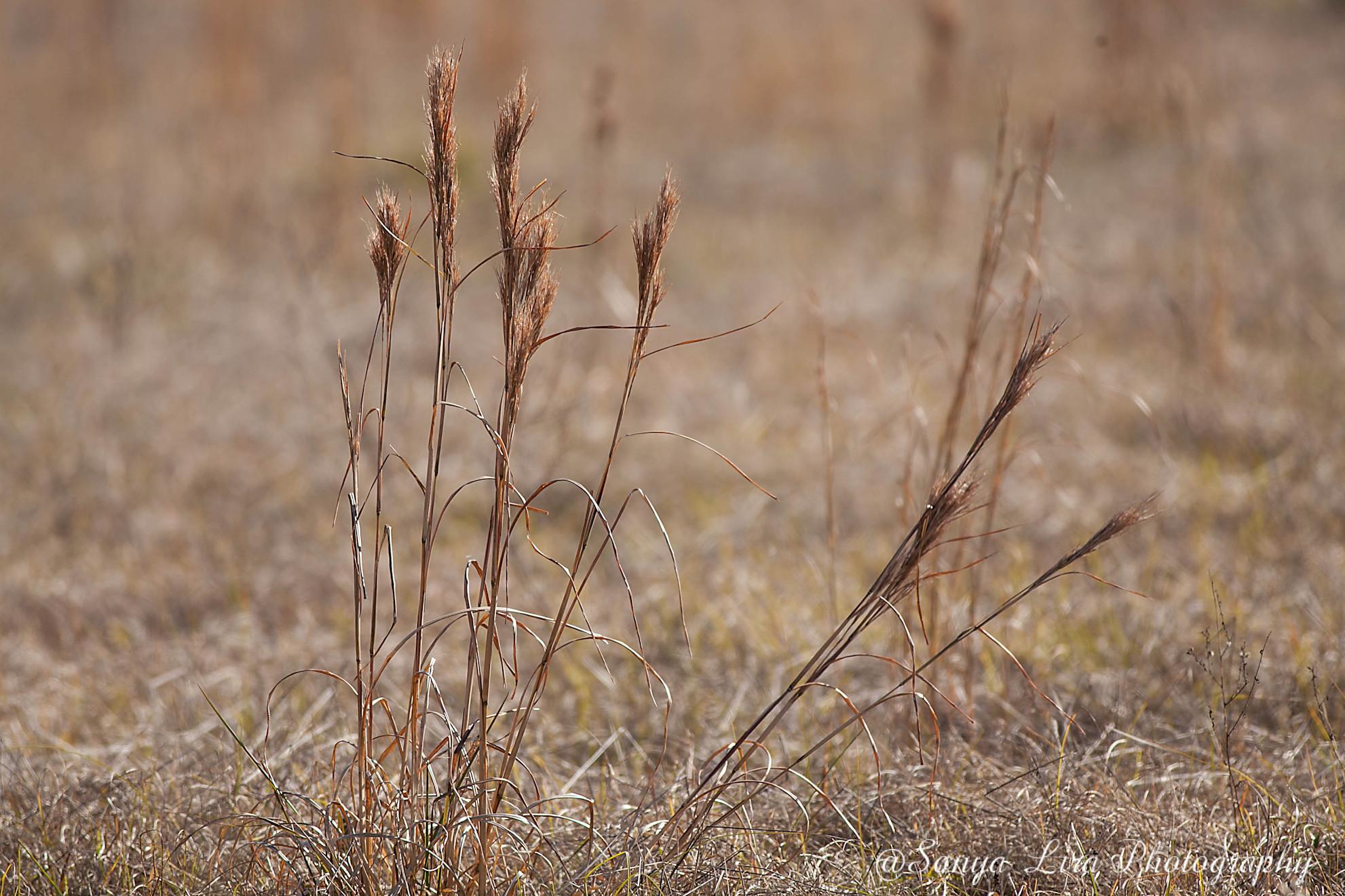 colorgrass1