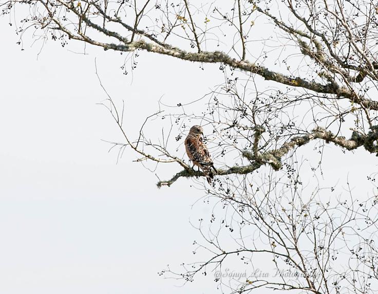 Hawk6