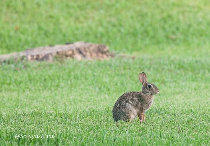 Rabbitntheyard2020